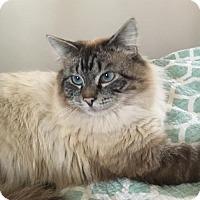 Adopt A Pet :: Fergus - Potomac, MD