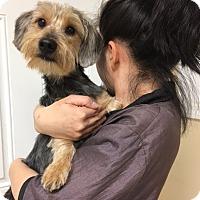 Adopt A Pet :: Donny - Long Beach, NY