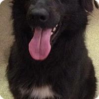 Adopt A Pet :: Pebbles - Valley Falls, KS