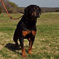 Adopt A Pet :: Hoss - Decatur, IN
