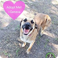 Adopt A Pet :: Geneva - Kingwood, TX