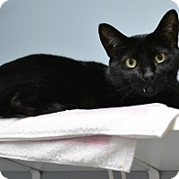 Adopt A Pet :: Isabella - Scituate, MA