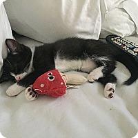 Adopt A Pet :: Bishop - Tampa, FL
