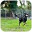 Photo 2 - Doberman Pinscher Mix Dog for adoption in Santee, California - Ranger