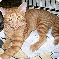 Adopt A Pet :: Waffles - Scottsdale, AZ