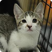 Adopt A Pet :: Cleo - Sacramento, CA