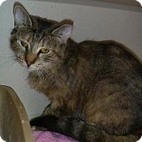 Adopt A Pet :: Jolene - Hamburg, NY