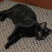 Adopt A Pet :: Garrett - Lacon, IL