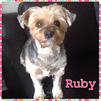 Adopt A Pet :: Ruby - Mississauga, ON