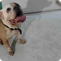 Adopt A Pet :: BOTOX - Orlando, FL