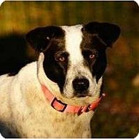 Adopt A Pet :: Peaches - Staunton, VA