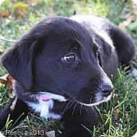 Adopt A Pet :: Spooky - Broomfield, CO