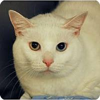 Adopt A Pet :: Tinkerbell - Lunenburg, MA