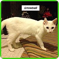 Adopt A Pet :: Snowball - Miami, FL
