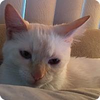 Adopt A Pet :: Angelo - Loveland, CO
