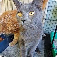 Adopt A Pet :: Big Ben - Fayette City, PA