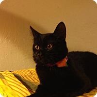 Adopt A Pet :: Audrey - Walnut Creek, CA