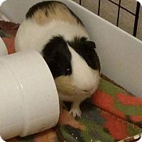 Adopt A Pet :: Boyd - Fort Worth, TX