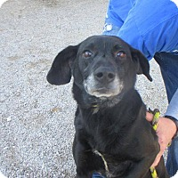 Adopt A Pet :: shadow - Shelter Island, NY
