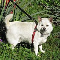 Adopt A Pet :: Casper - Oakland, AR