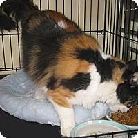 Adopt A Pet :: Abagail - Dallas, TX