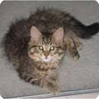 Adopt A Pet :: Bella - Franklin, NC