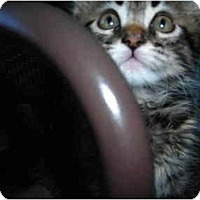 Adopt A Pet :: Nikko & Company - Riverside, RI