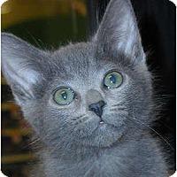 Adopt A Pet :: Mouth - Encinitas, CA