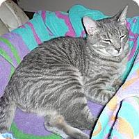 Adopt A Pet :: *Henry - Winder, GA