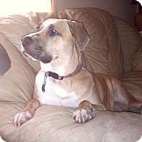 Adopt A Pet :: Baby - North Benton, OH