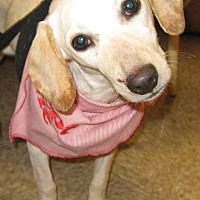Adopt A Pet :: Miracle - Laconia, IN