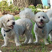 Adopt A Pet :: Brady & Kodi - West Deptford, NJ