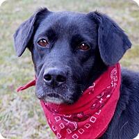 Adopt A Pet :: Lil - Mocksville, NC