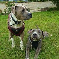 Adopt A Pet :: Lily&Doogie-URGENT - Los Angeles, CA