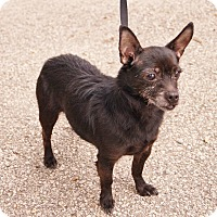 Adopt A Pet :: Penny - Muskegon, MI