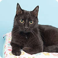 Adopt A Pet :: Diamond - Wilmington, DE