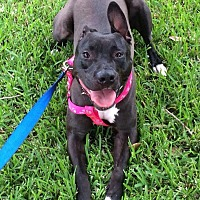 Adopt A Pet :: Callie - Lake Charles, LA