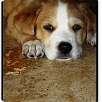 Adopt A Pet :: June - Gilbert, AZ