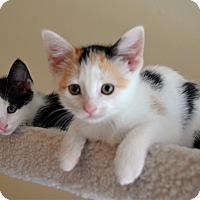 Adopt A Pet :: Rose - Port Republic, MD