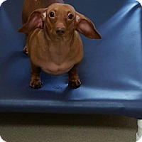 Adopt A Pet :: Oscar - Garwood, NJ