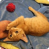 Adopt A Pet :: Little Larry - Simpsonville, SC