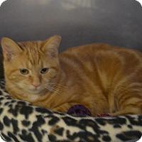 Adopt A Pet :: Blaise - Byron Center, MI