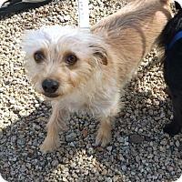 Adopt A Pet :: Whiskey (with Benny) - Phoenix, AZ