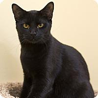 Adopt A Pet :: A..  Odeffe - Mooresville, NC