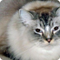 Adopt A Pet :: Roscoe - Wildomar, CA