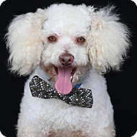 Adopt A Pet :: Borrego - SAN PEDRO, CA