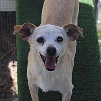 Adopt A Pet :: Rosie - Kempner, TX