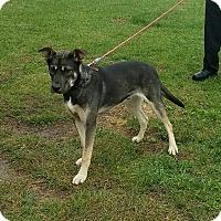 Adopt A Pet :: Magnum - Cameron, MO