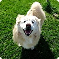Adopt A Pet :: Easton - Belleville, MI