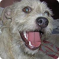 Adopt A Pet :: PRESCOUS - Hollywood, FL